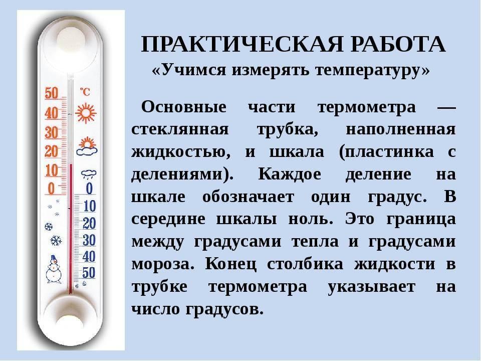 Как измерить температуру котенку?