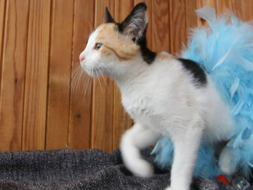 Кошка ест селикагелевый наполнитель... это опасно?