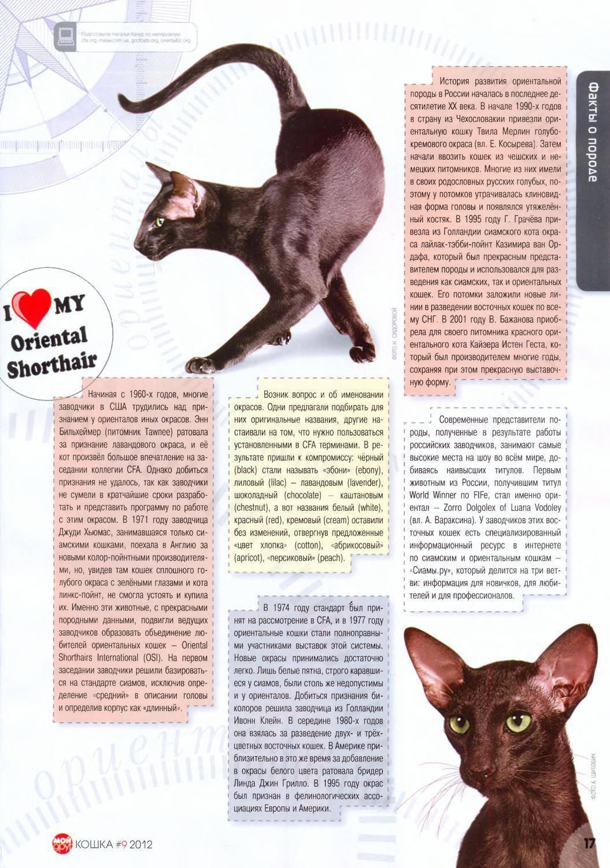 Кошки ориенталы – особенности и фото породы