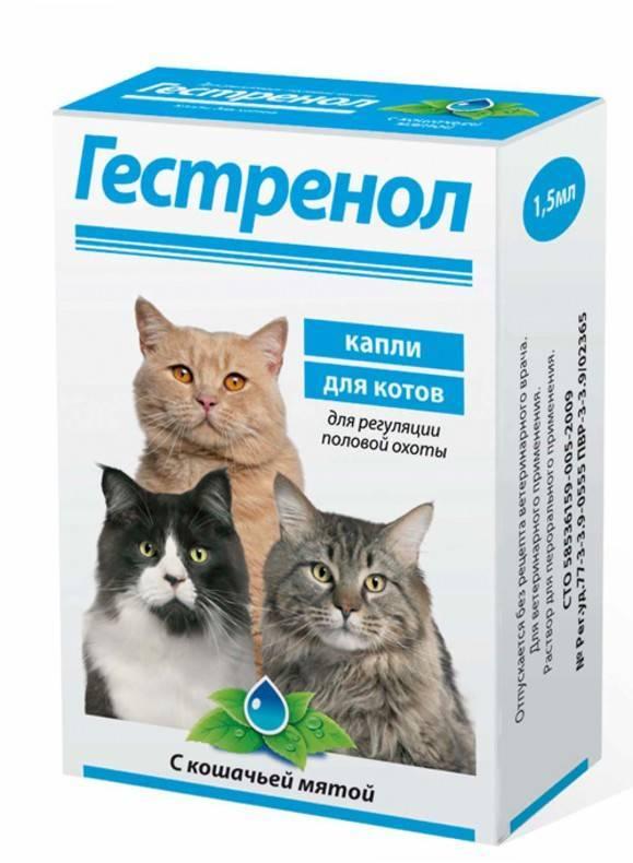 Гестренол для кошек и котов: инструкция по применению