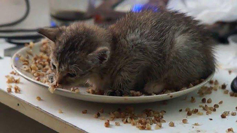 Какая кошка лучше ловит мышей: особенности и как выбрать