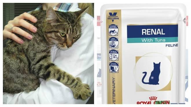 Почечная недостаточность у кошек: симптомы лечение острой и хронической форм