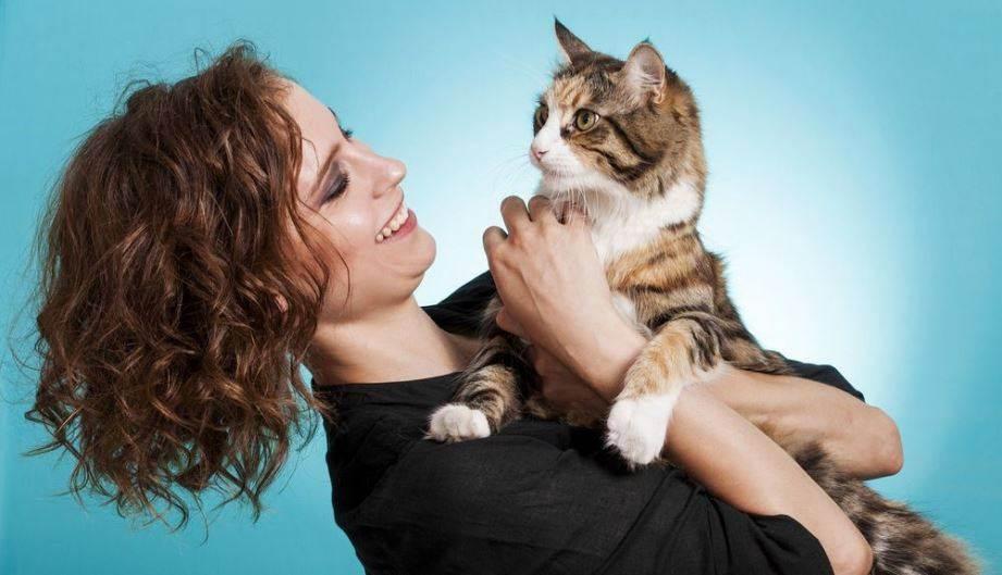 Чем поить больную кошку?