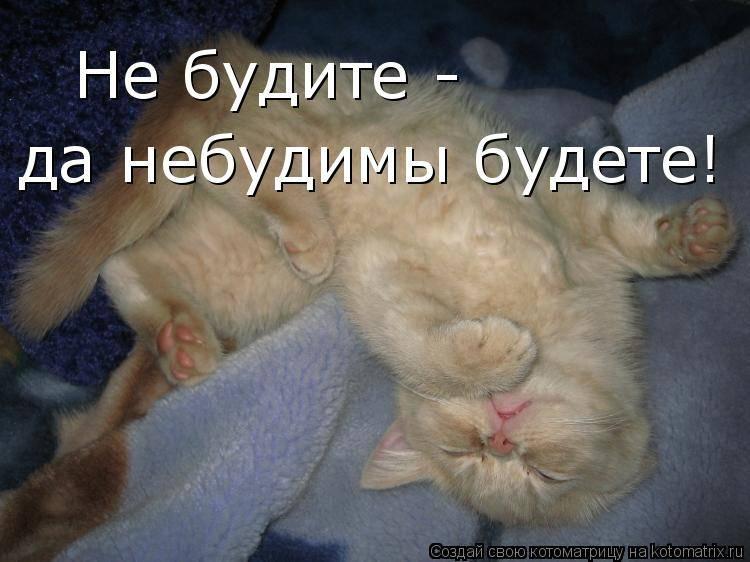 Как приучить кота спать ночью. приучение котёнка к месту для сна