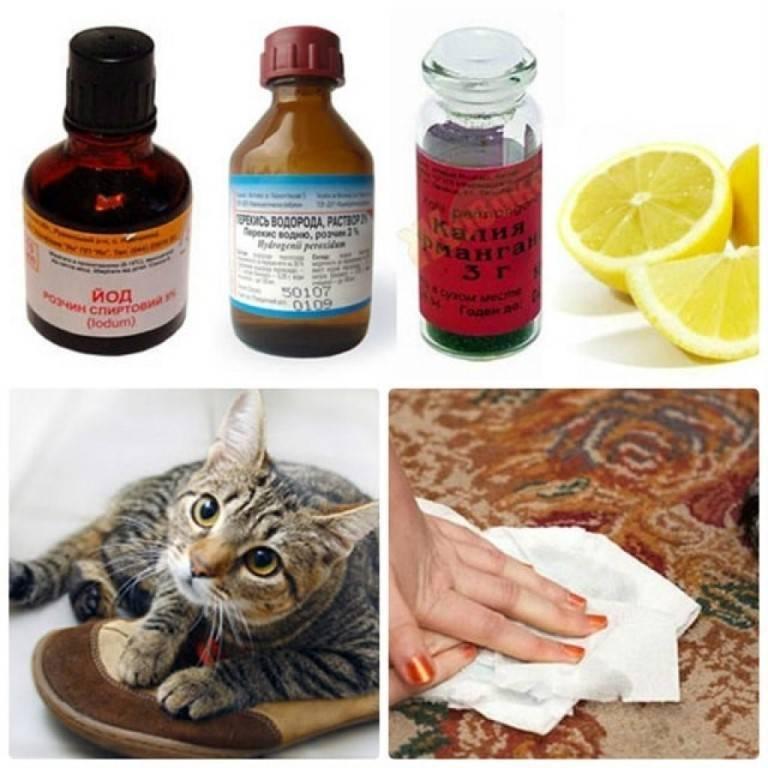 8 эффективных способов уборки кошачьей мочи