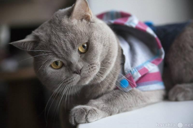 Сколько живут кошки и 8 советов как продлить жизнь