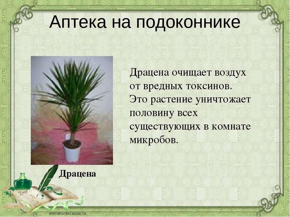 Комнатные растения ядовитые для кошек: тюльпаны, фикусы, алое