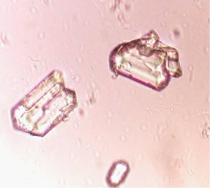 Трипельфосфаты в моче у собаки: симптомы, причины, анализы и лечение