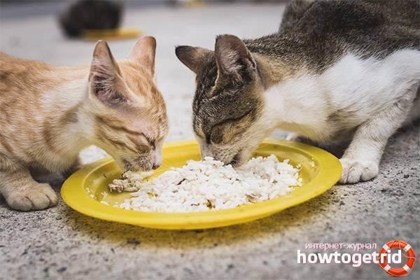 Какую крупу можно давать кошкам