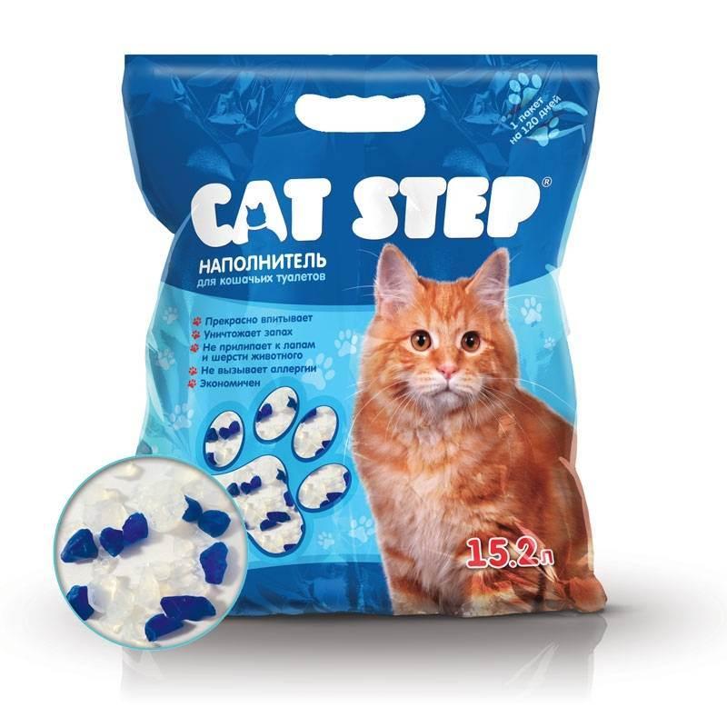 Котенок ест наполнитель для туалета — что делать