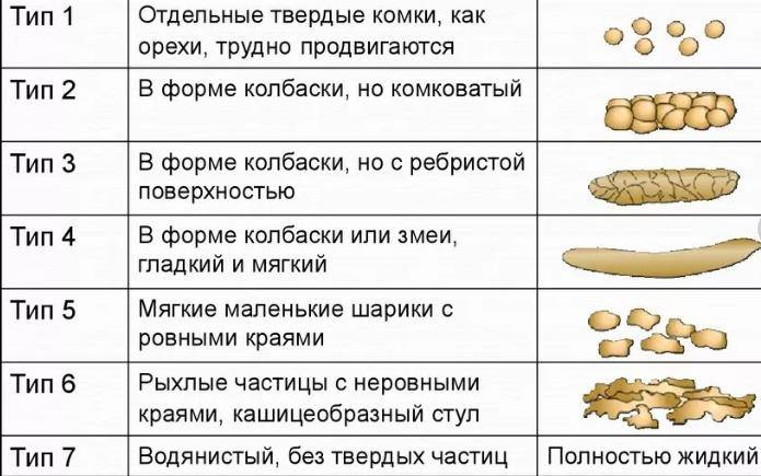 Причины диареи от сухого корма у кошек