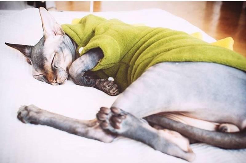 Какая у кошек нормальная температура   энциклопедия домашних животных
