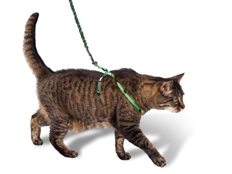 Когда и почему кошка начинает гулять после родов