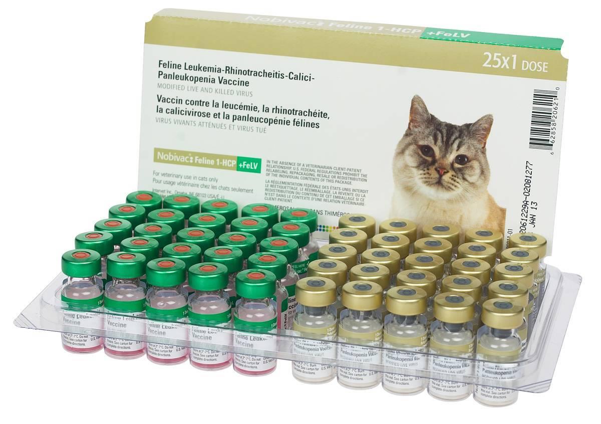 Ринотрахеит у кошек симптомы и лечение в домашних условиях