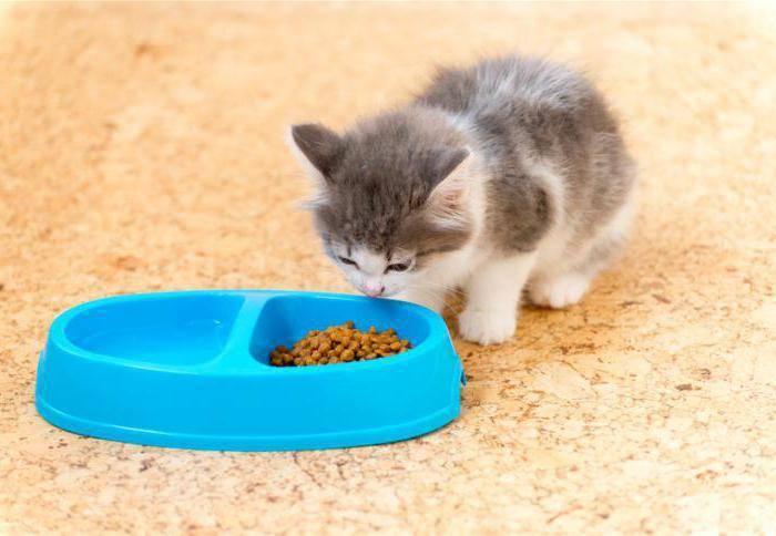 Чем кормить котёнка в 4 месяца: особенности питания, продукты и рекомендации чем кормить котёнка в 4 месяца: особенности питания, продукты и рекомендации