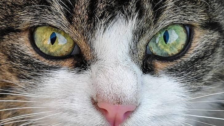 Почему нельзя смотреть в глаза кошке?. что случится, если пристально посмотреть кошке в глаза?