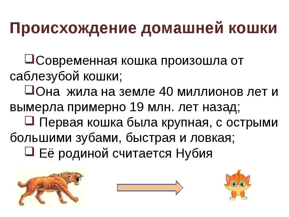 Кошачьи предки