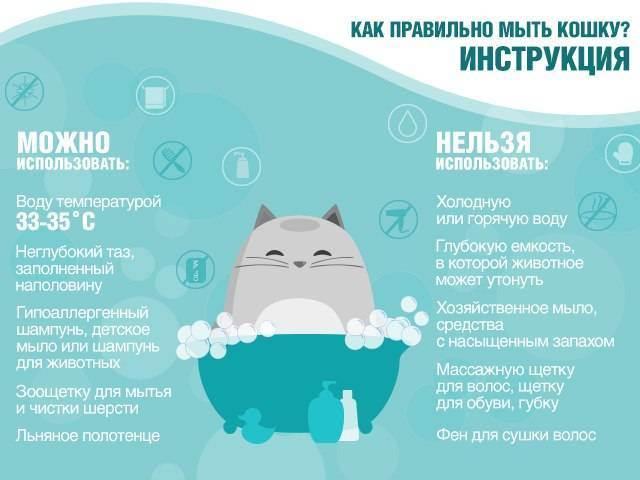 Как правильно купать кошку