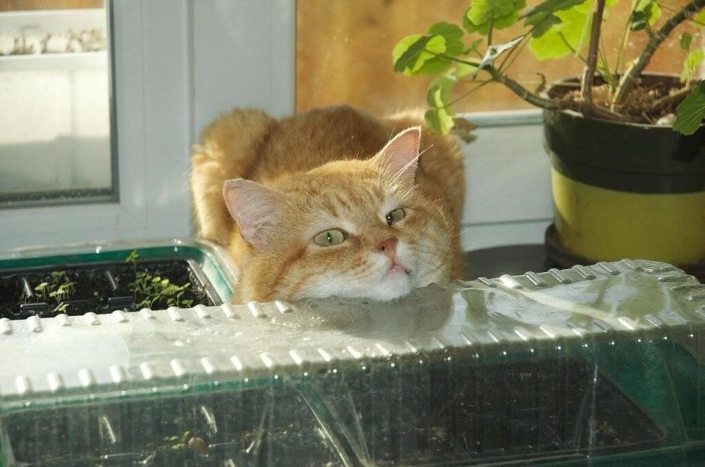 Как отпугнуть кошек с участка навсегда