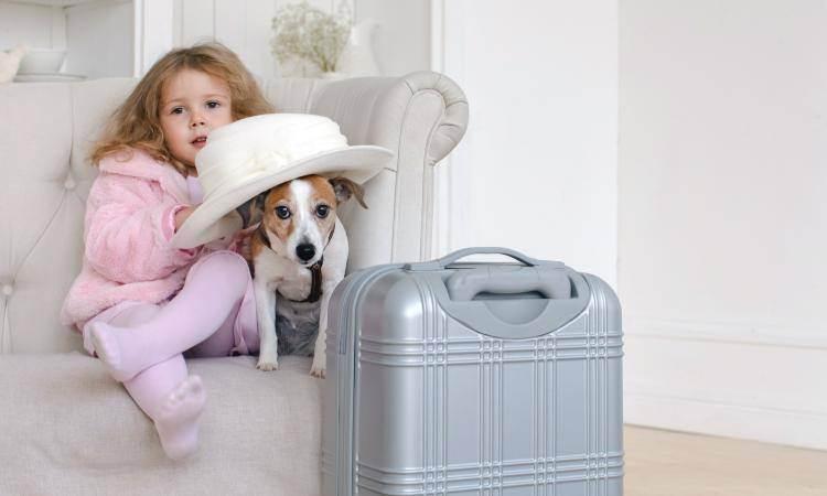 Документы для путешествия с собакой