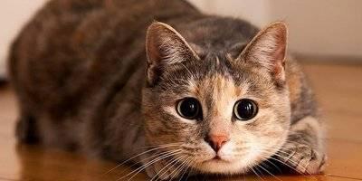 Топ-13 причин, почему котенок дрожит, что делать