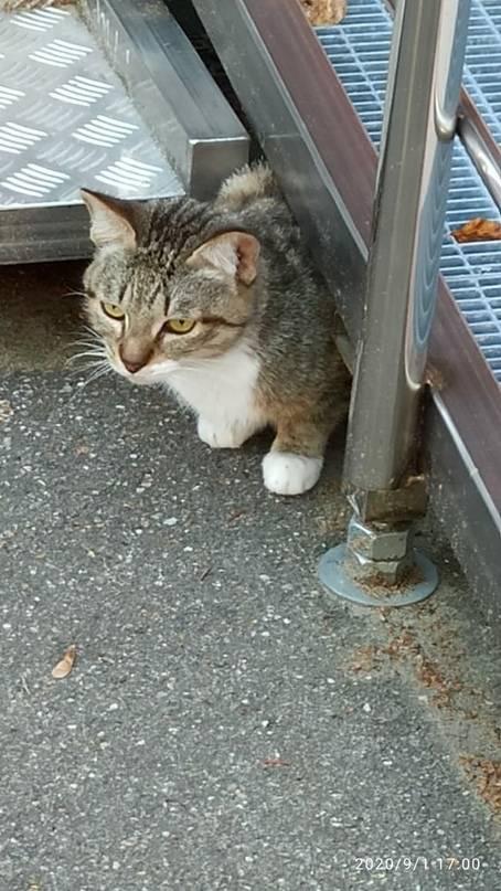 Кошка убежала из дома, как найти, что делать