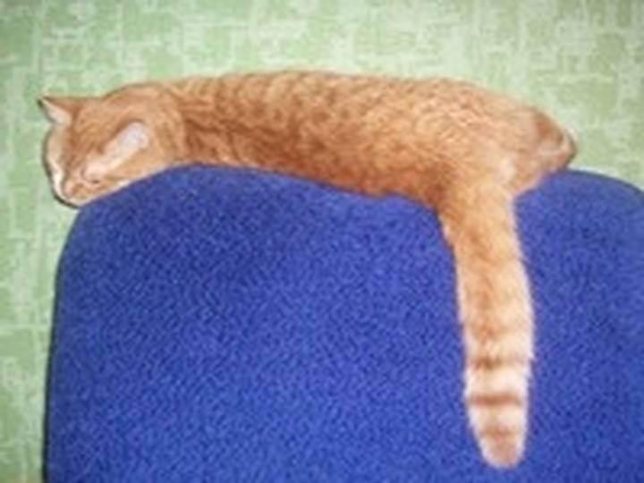 Нормально, если у кошки начал лысеть хвост?