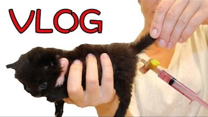 Клизма кошке при запоре: состав, техника введения, альтернативные методы
