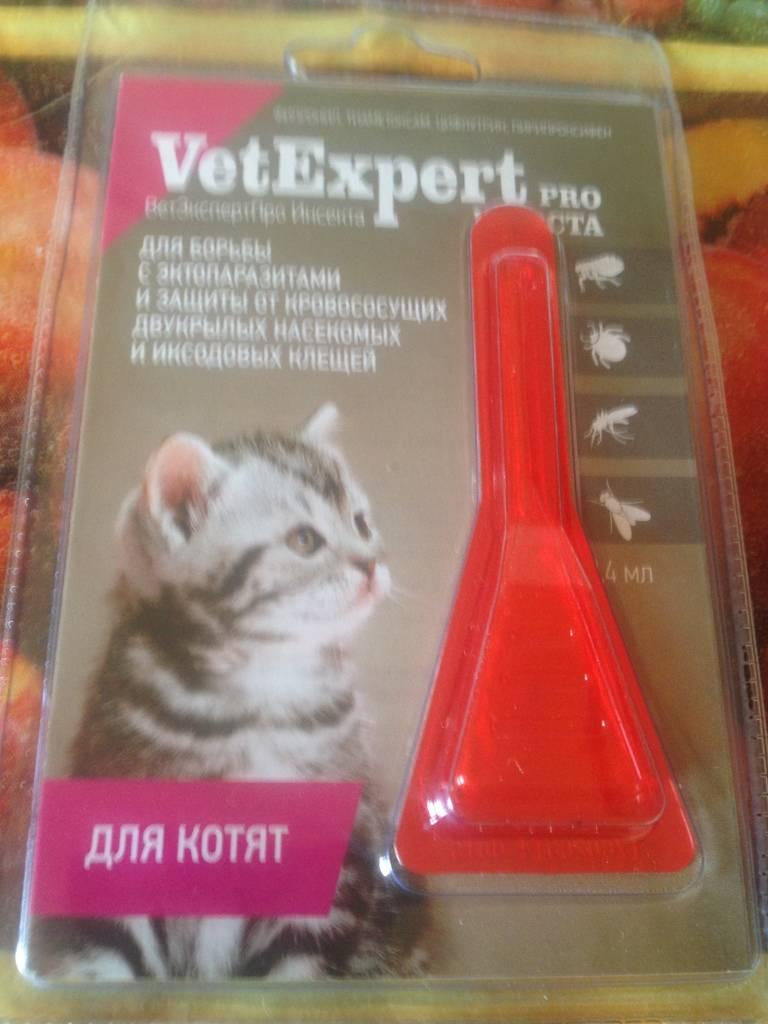Как вывести блох у котенка безопасными и эффективными средствами как вывести блох у котенка безопасными и эффективными средствами