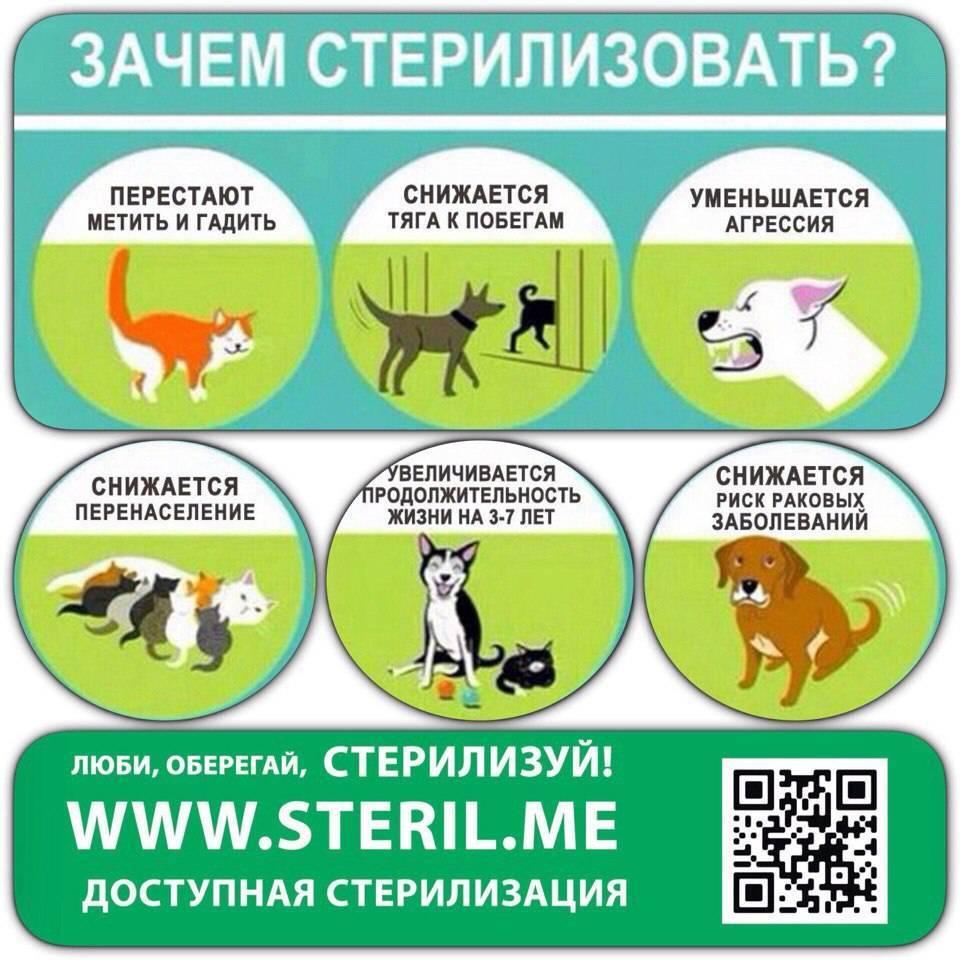 В каком возрасте лучше делать стерилизацию кошки