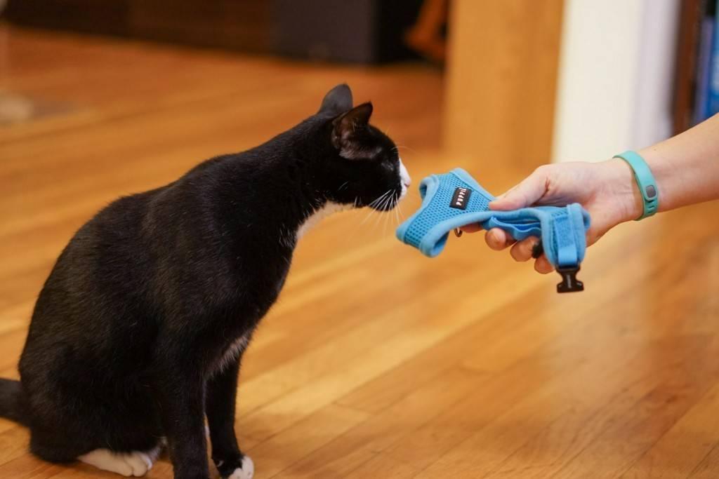 Как приручить дикую кошку? советы эксперта