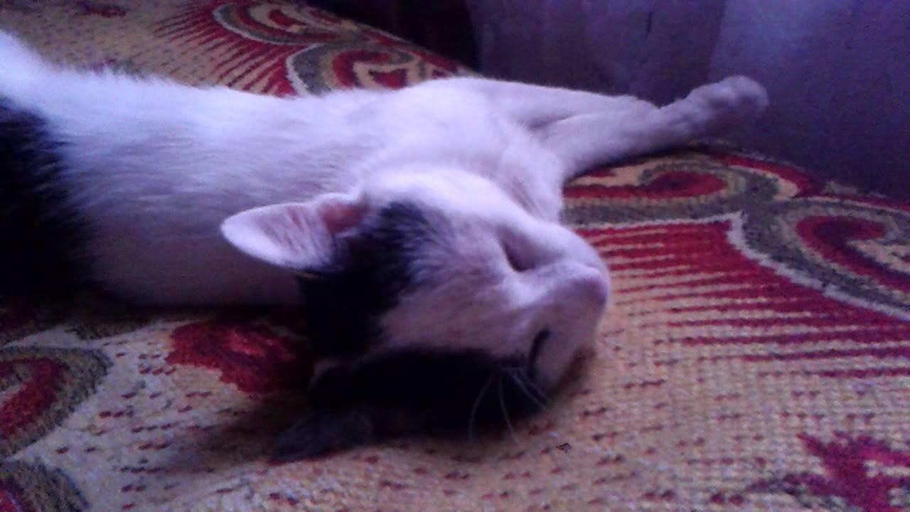 Почему котята дергаются во сне - сны