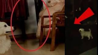 Правда ли, что коты и кошки видят призраков. видят ли коты призраков? видят ли коты умерших