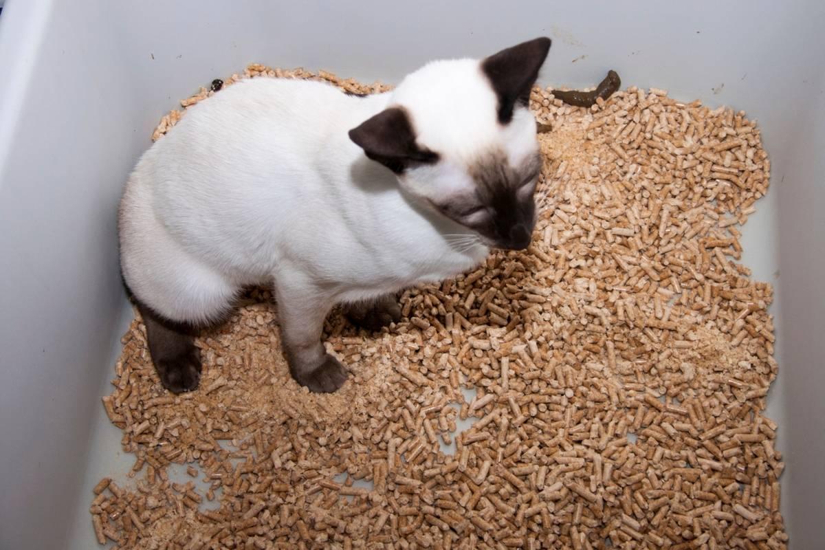 Как часто котёнок ходит в туалет: норма и отклонения