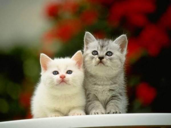 Две кошки в доме: если появилась вторая кошка, проблемы и решения