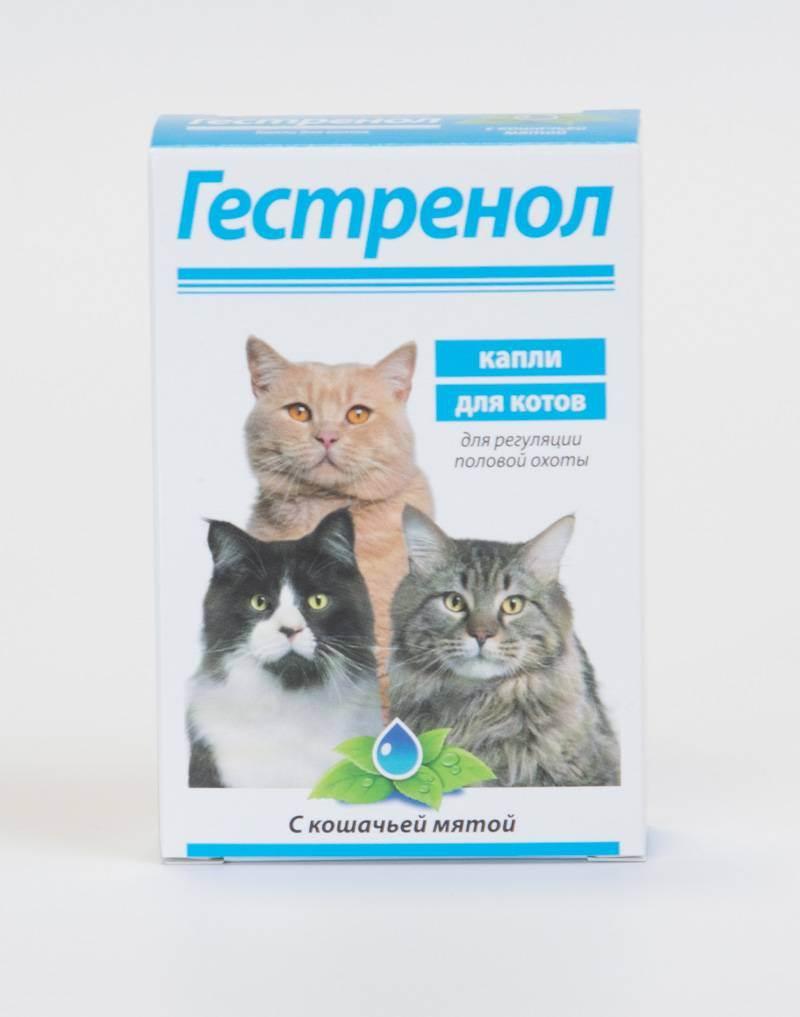 Обзор капель и таблеток от гуляния для котов (антисекс)