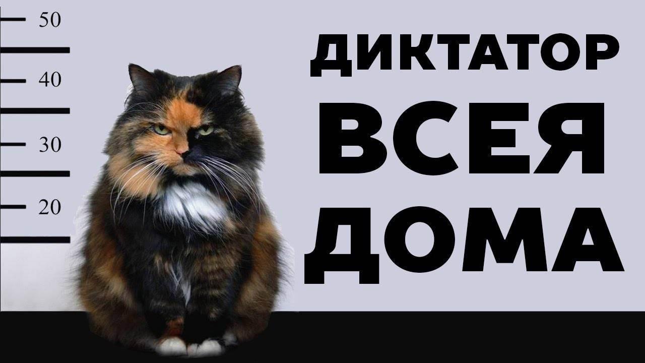 Выберите кошку и мы расскажем всё о вашем характере! посмотрите на себя со стороны