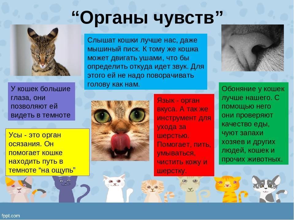 Зачем кошке хвост, для чего он нужен и каково его строение, может ли она без него обходиться?