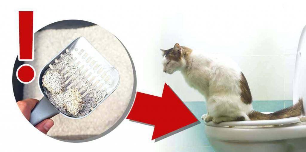 Лечение поноса у кошки в домашних условиях: лекарства, советы