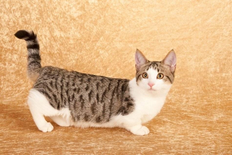 Самые маленькие породы кошек – список, описание, фото и видео - «как и почему»