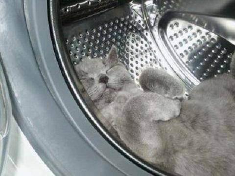 Безопасный дом: как защитить котенка от скрытой угрозы?