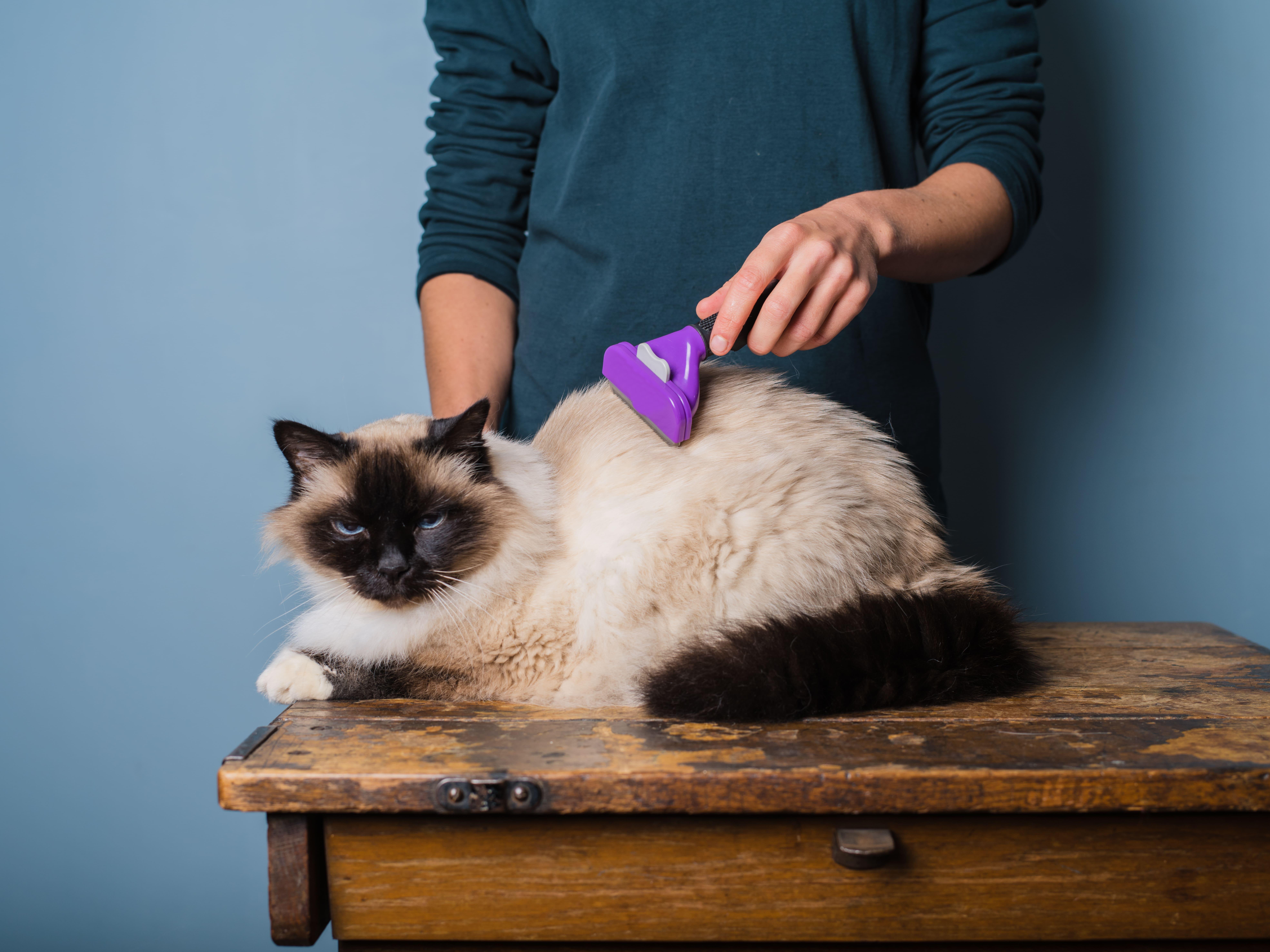 Как ухаживать за шерстью кошки?