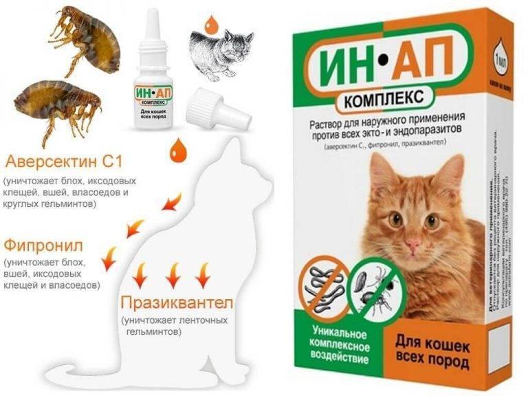 Ин ап комплекс для кошек: цена, отзывы, инструкция, отзывы ветеринаров - о простуде