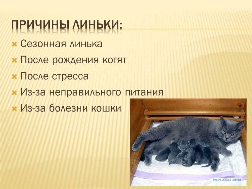Линька кошек | советы от питомца