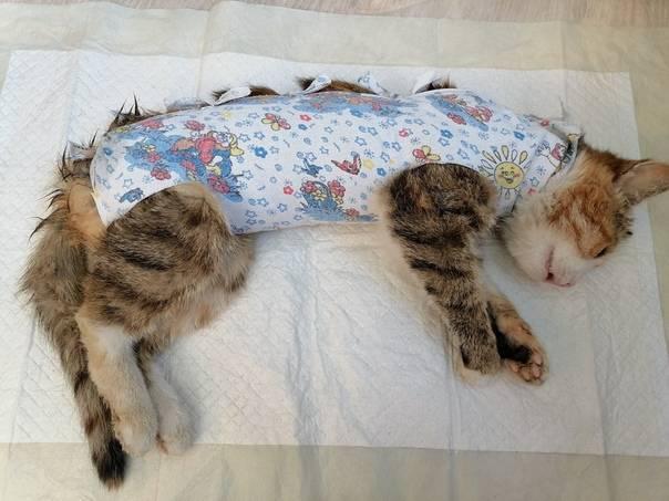 Виды и способы стерилизации кошек: какой вариант лучше всех, безоперационная, можно ли уберечь кошку от беременности без операций