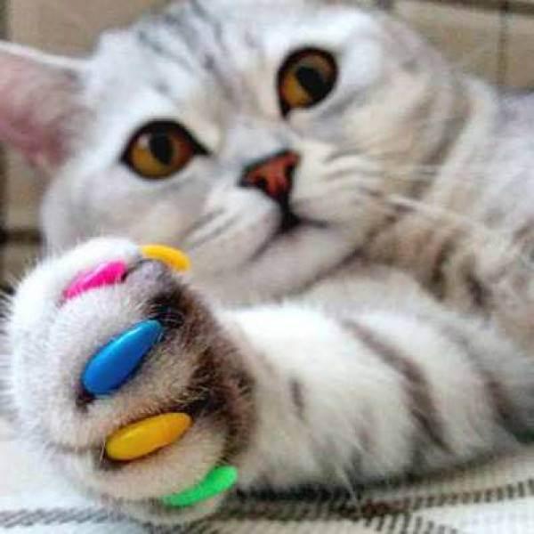 Антицарапки для кошек: преимущества силиконовых накладок (колпачков) для когтей и их применение, отзывы ветеринаров и владельцев