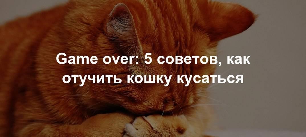 Как отучить котенка кусаться и царапаться: действенные методы