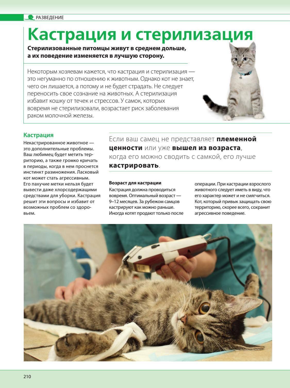 Стерилизация: мифы и реальность - домашние животные