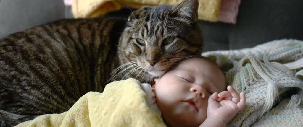 Новорожденный и кот - страна мам