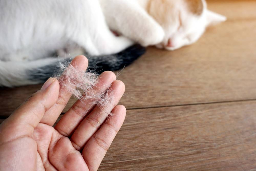 Шерсть в желудке у кошки – как определить проблему и помочь животному?